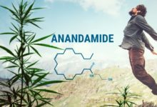 Photo of Anandamide and Its Effect on Our Body